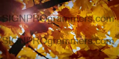 WM 09-014 FALL BACKGROUND 192×384 RGB
