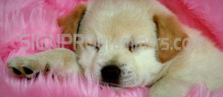 14-004 Dog Background 192×440