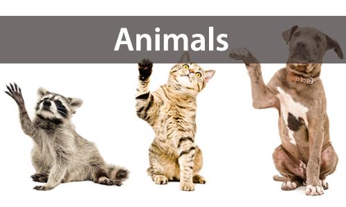 animalsl